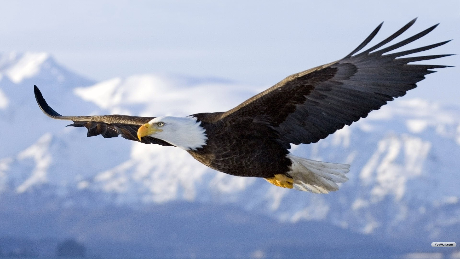 YouWall   Flying Eagle Wallpaper   wallpaperwallpapersfree wallpaper 1920x1080