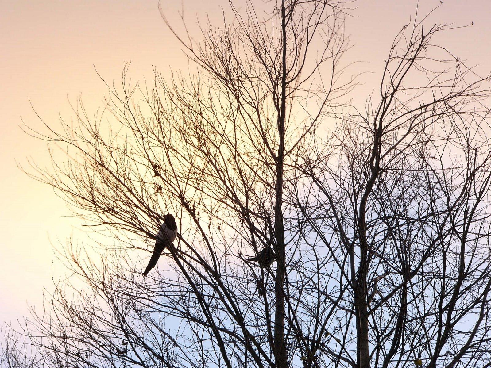 Stavanger Photos Birds On The Tree 1600x1200