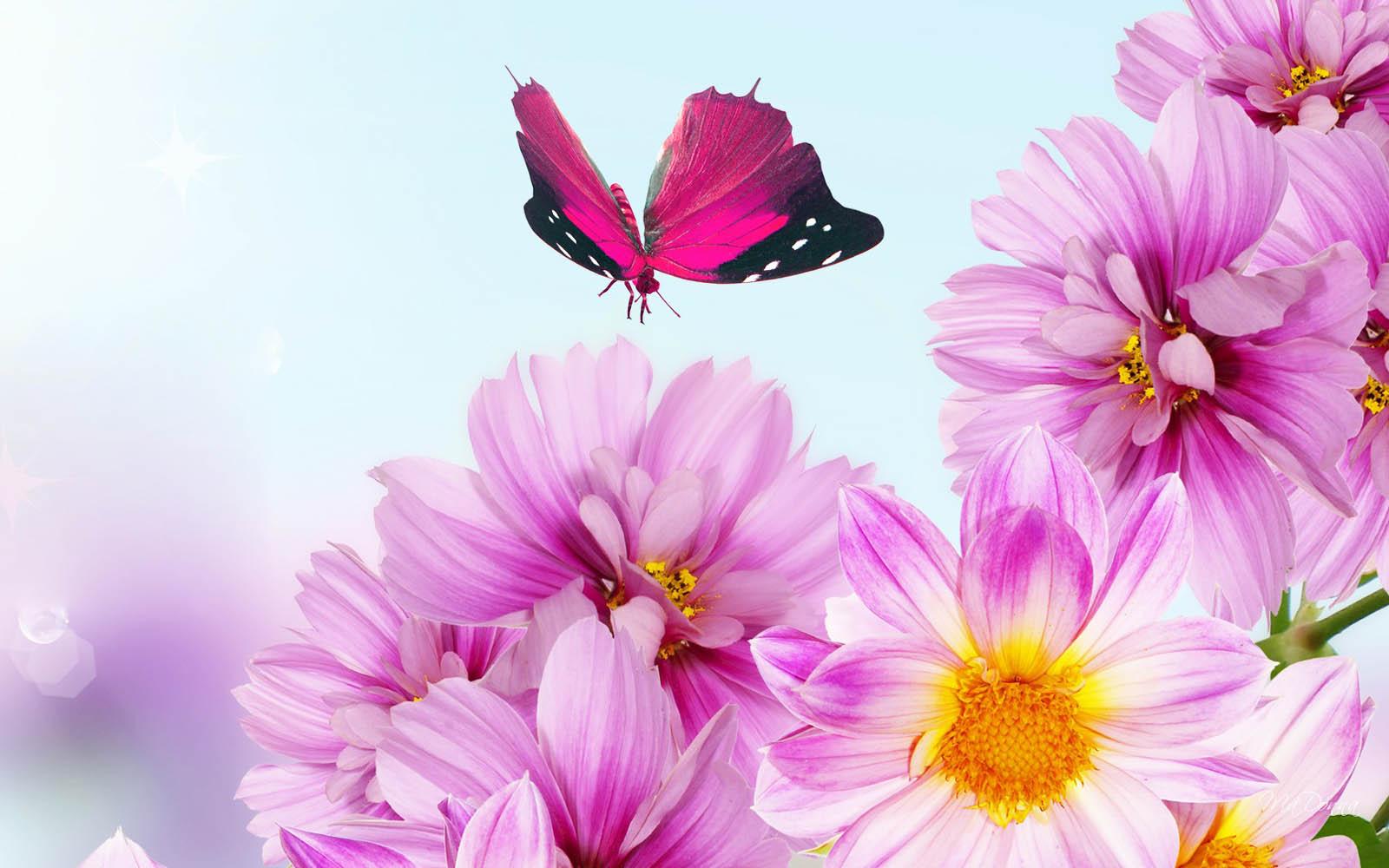 Flower Background Wallpaper Desktop Wallpapers 1600x1000