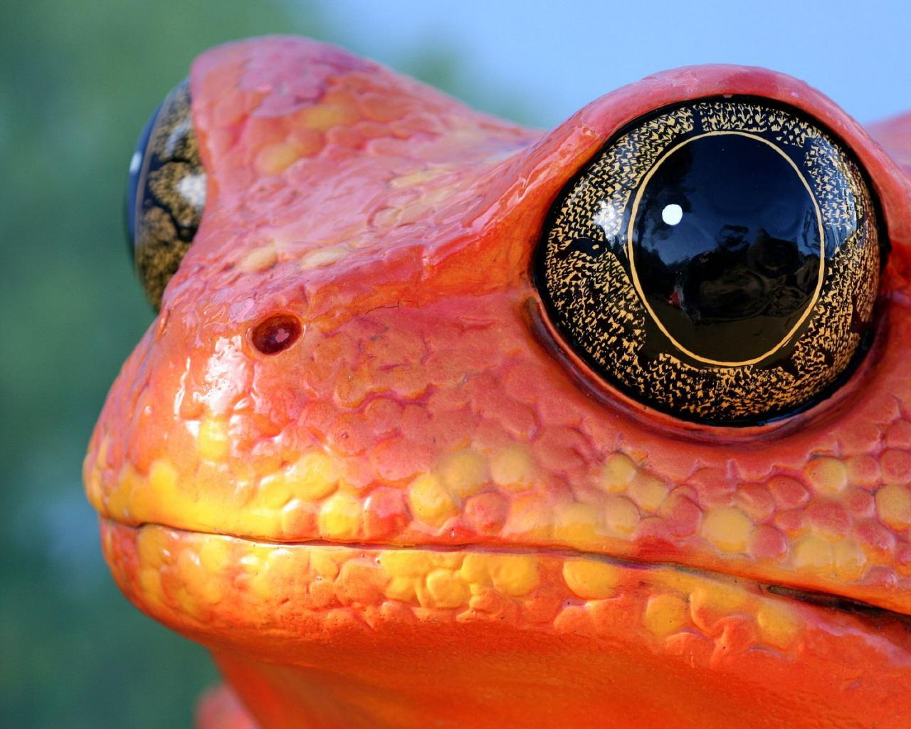 Cool Orange Frog Wallpapers Cool Orange Frog HD Wallpapers Cool 1280x1024