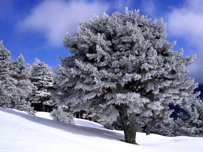 scene wallpaper   Dreamy Winter Snow   country winter scenes   Winter 700x525