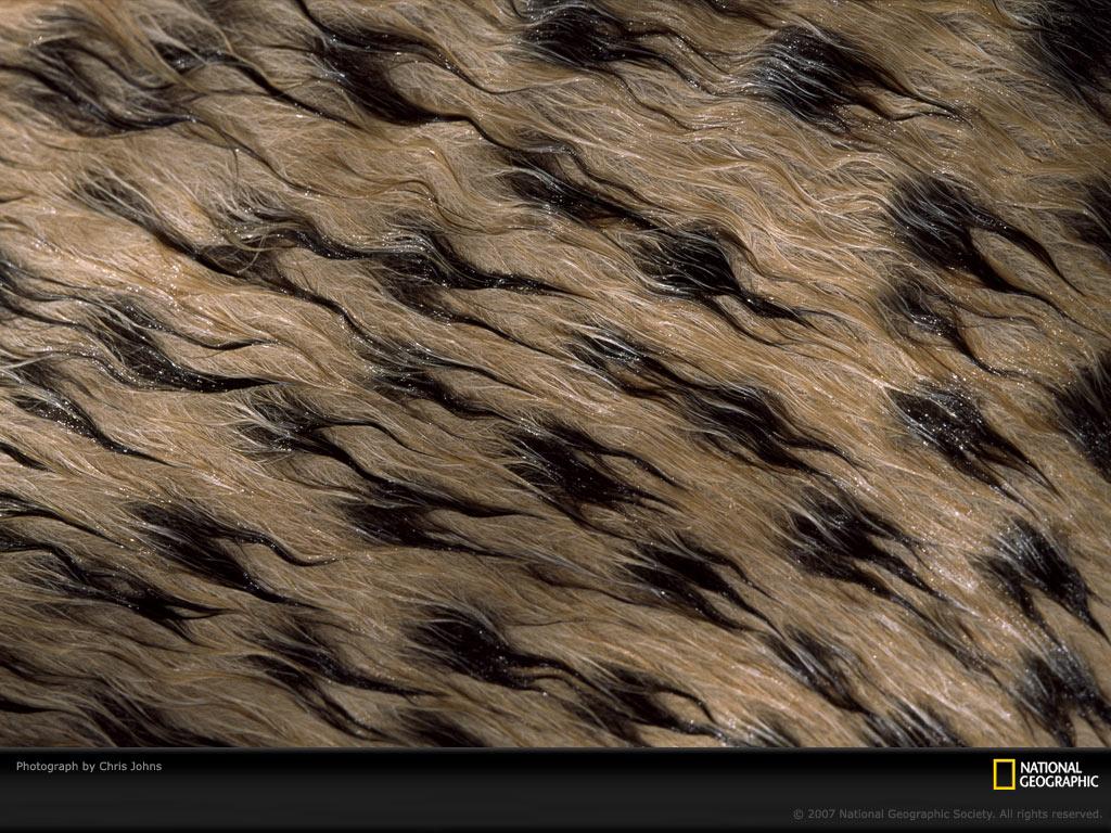 Fur wallpaper fur fabric bedroom wallpaper   Magazines 24 1024x768