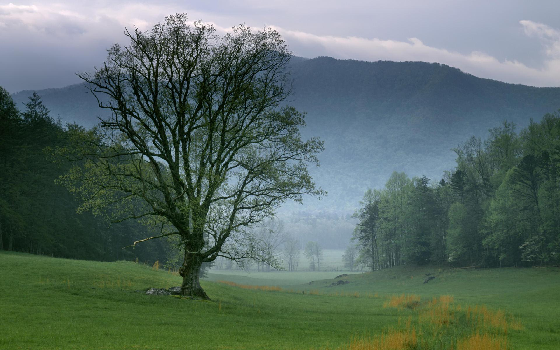 cades cove great smoky mountains national park tennessee HD Wallpaper 1920x1200