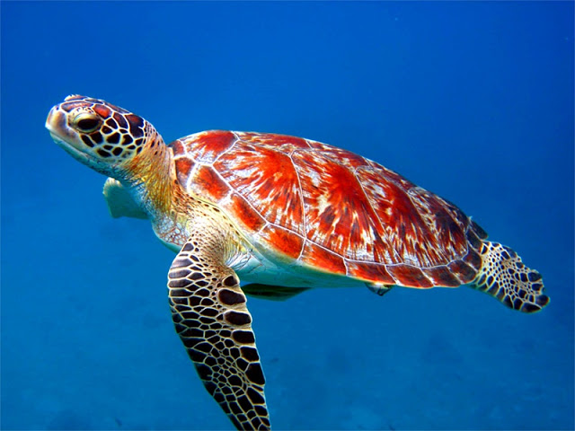 Top 27 Sea Animals Wallpapers IN HD 640x480