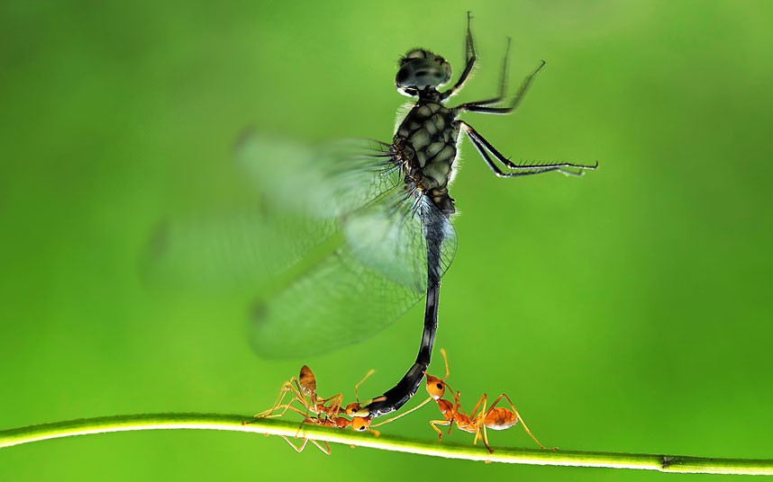 Dragon fly wallpapers 858x536