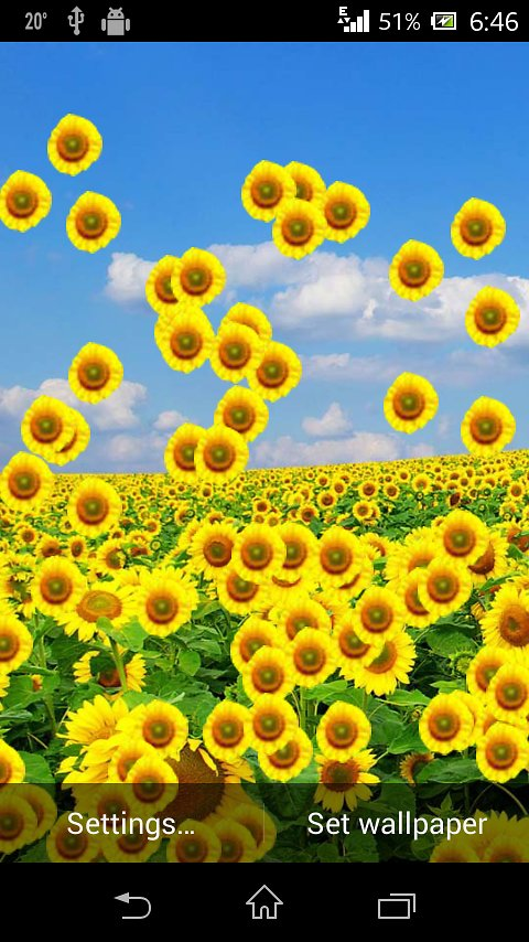 3D Sunflower HD Live Wallpaper   Android Apps and Tests   AndroidPIT 480x854