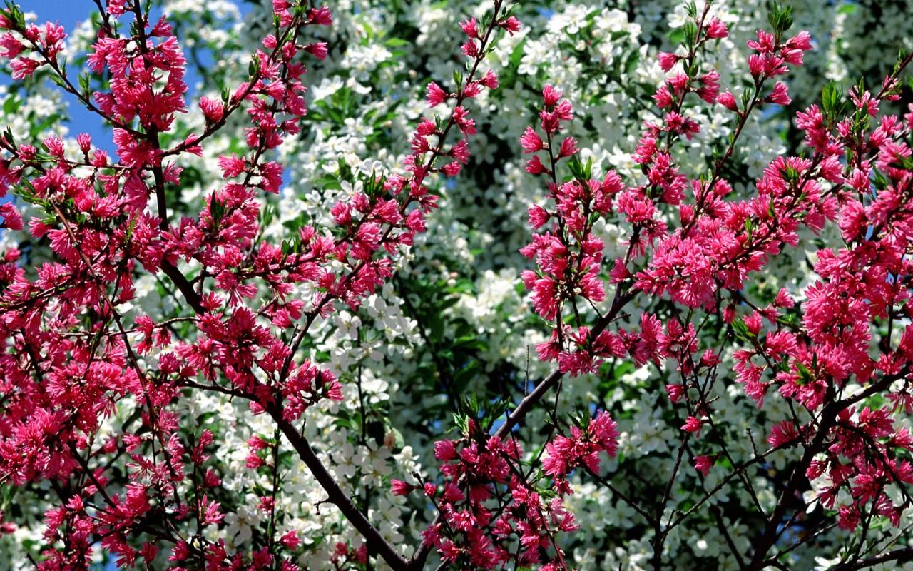 1280x800 Spring in Flower desktop PC and Mac wallpaper 1280x800
