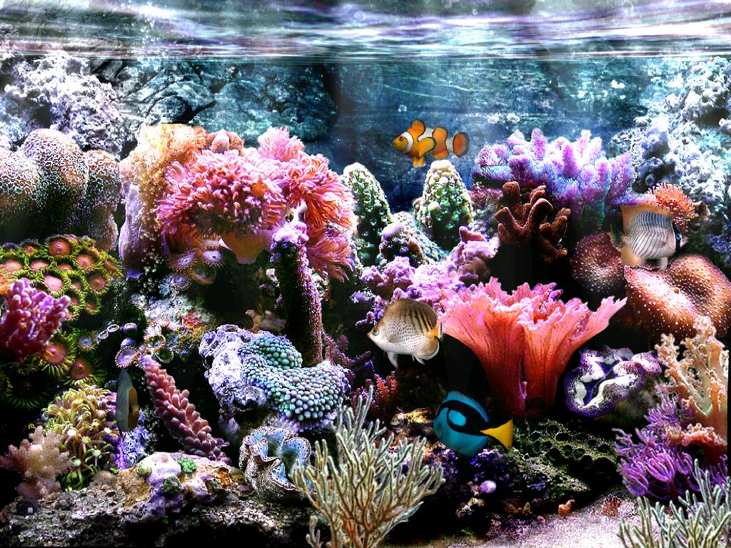 aquarium wallpaper for windows 7 wallpapersafari. Black Bedroom Furniture Sets. Home Design Ideas