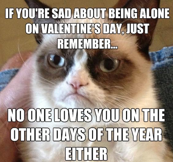 Animal Memes   Valentines Day Grumpy Cat   Funny Memes 564x530