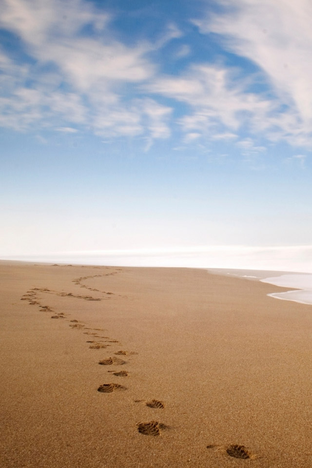 footprints in the sand wallpaper Car Pictures 640x960