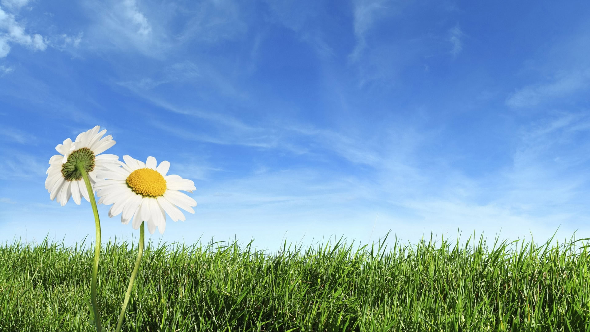 free spring screensavers for desktop which is under the spring 1920x1080