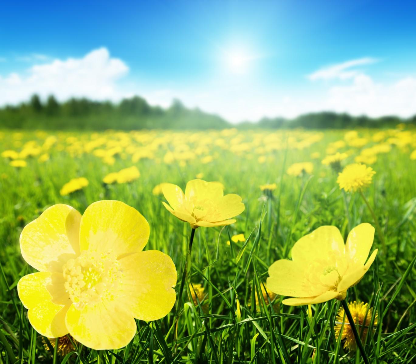 A Beautiful Sunny Day HD wallpaper  |Sunny Beautiful Day