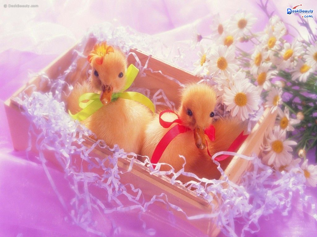 Cute Valentines Day Wallpaper 9738 Hd Wallpapers in Cute   Imagesci 1024x768