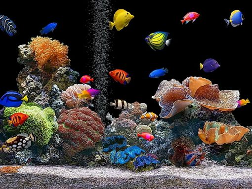 Download Live Aquarium wallpapers to your cell phone   aquarium corals 510x383