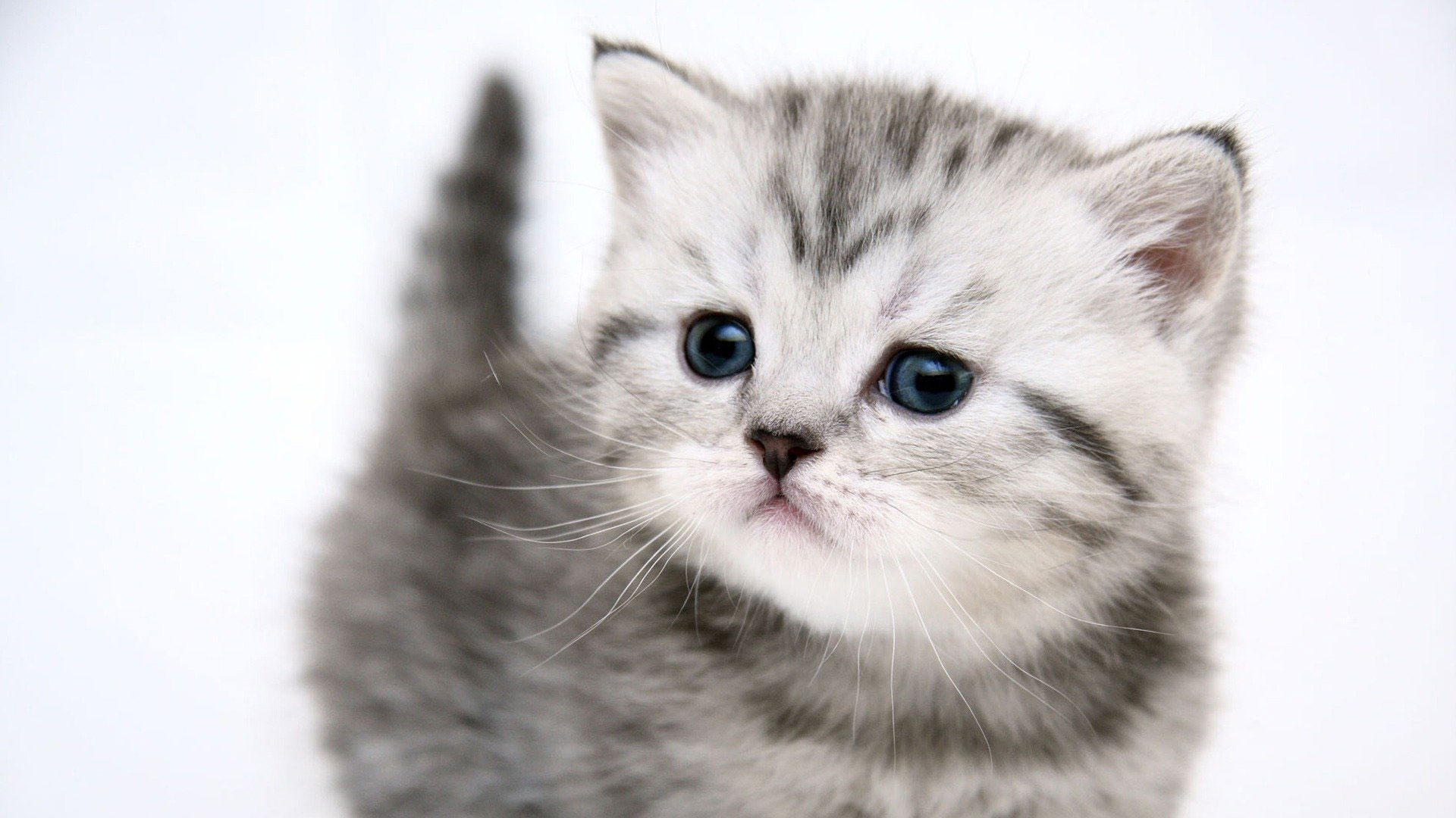 Cat Wallpaper 2 1920x1080