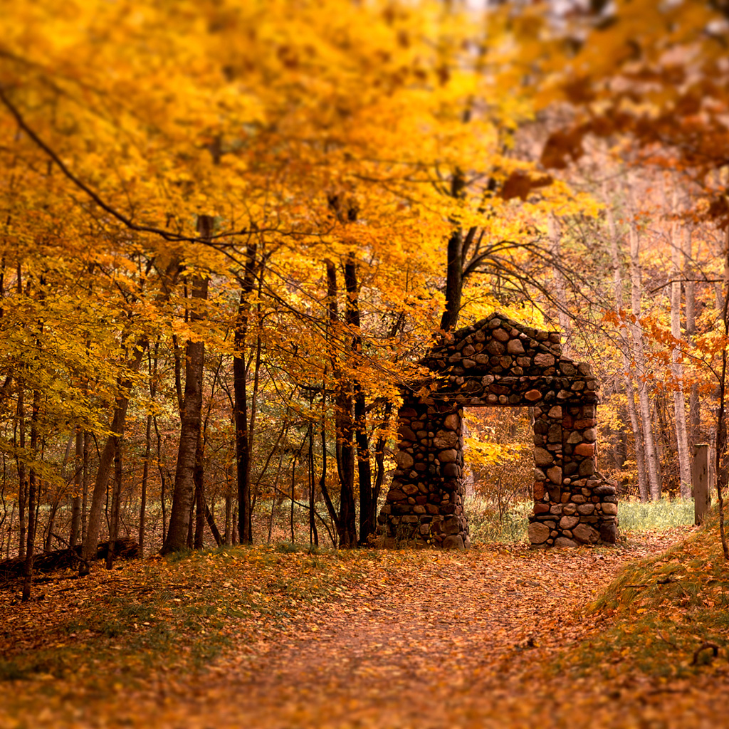 Beautiful fall colors | ipadwallpapers.me