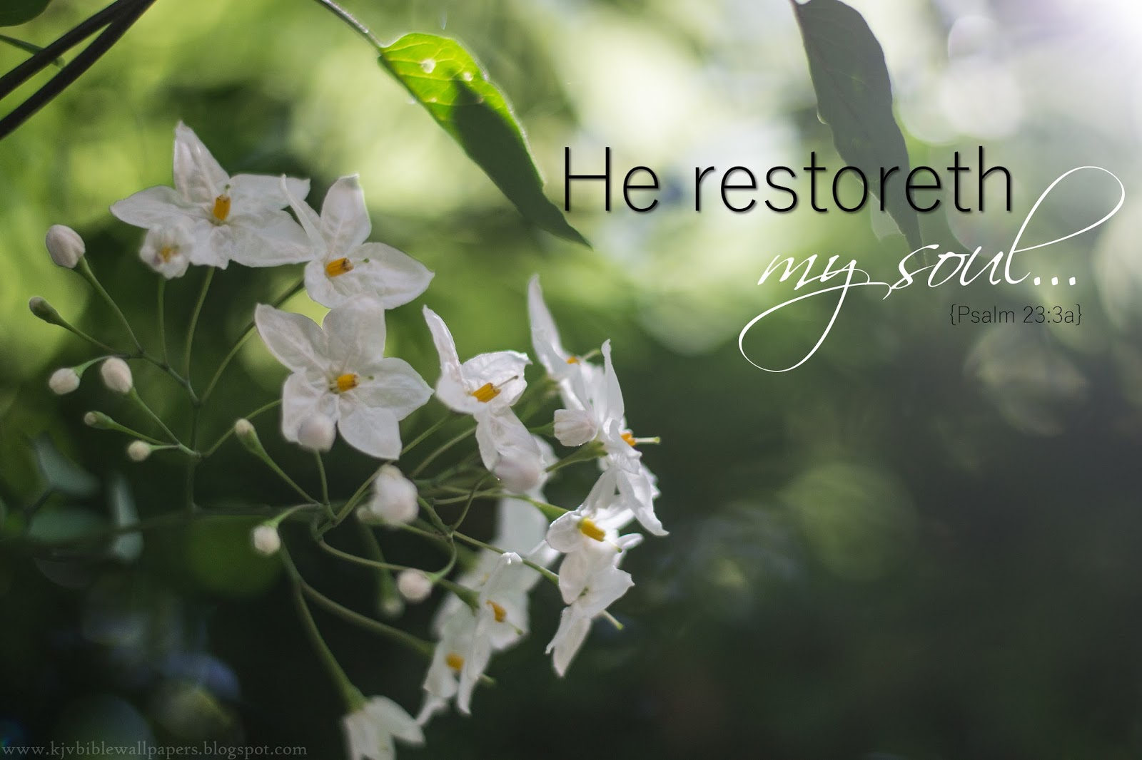 He Restoreth My Soul Psalm 233 1600x1066