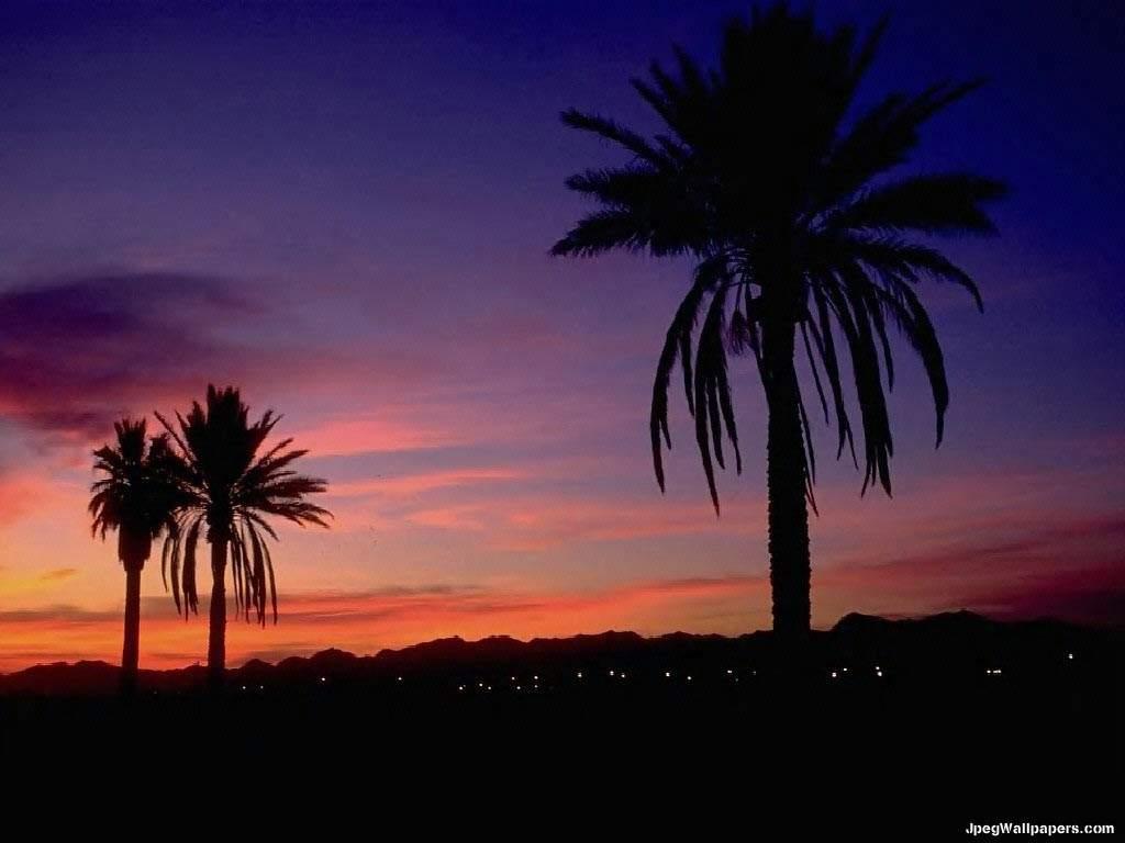 Tropical sunset Arizona wallpaper 1024x768