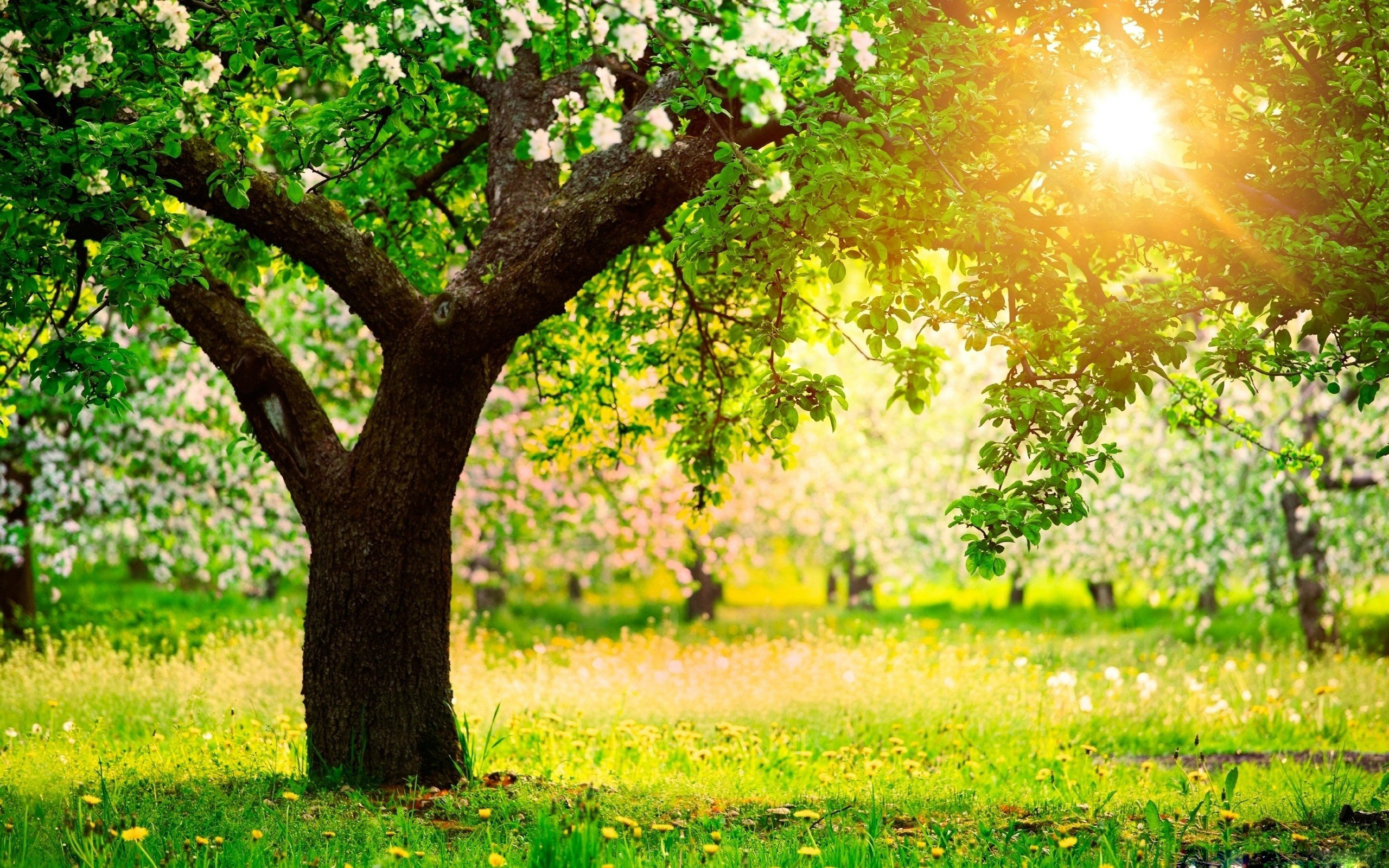 Spring Wallpapers HD download 2560x1600