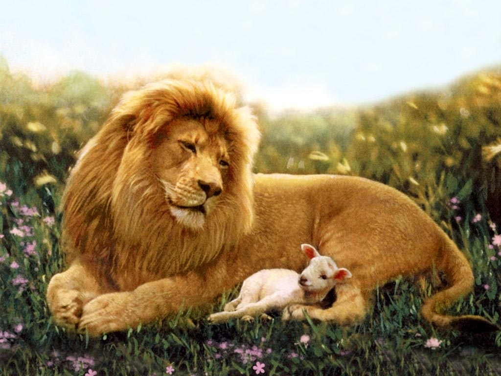 1024x768 Download Lion And Lamb Wallpaper Which Is Under The Wallpapers