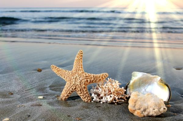beach sand sunlight starfish seashells depth of field sea 5753x3809 600x397