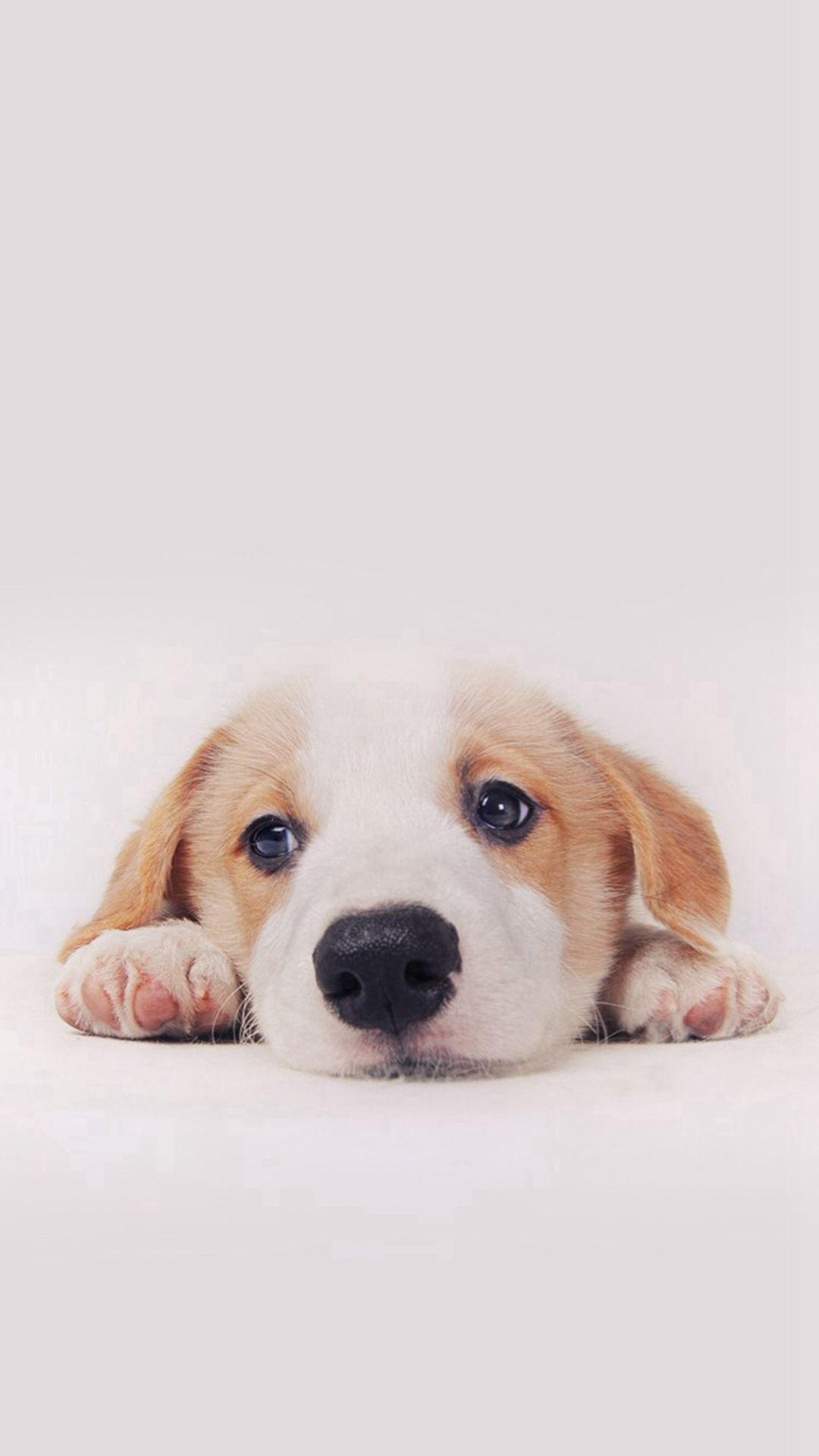 Cute dog wallpaper Dog background Dog 1080x1920