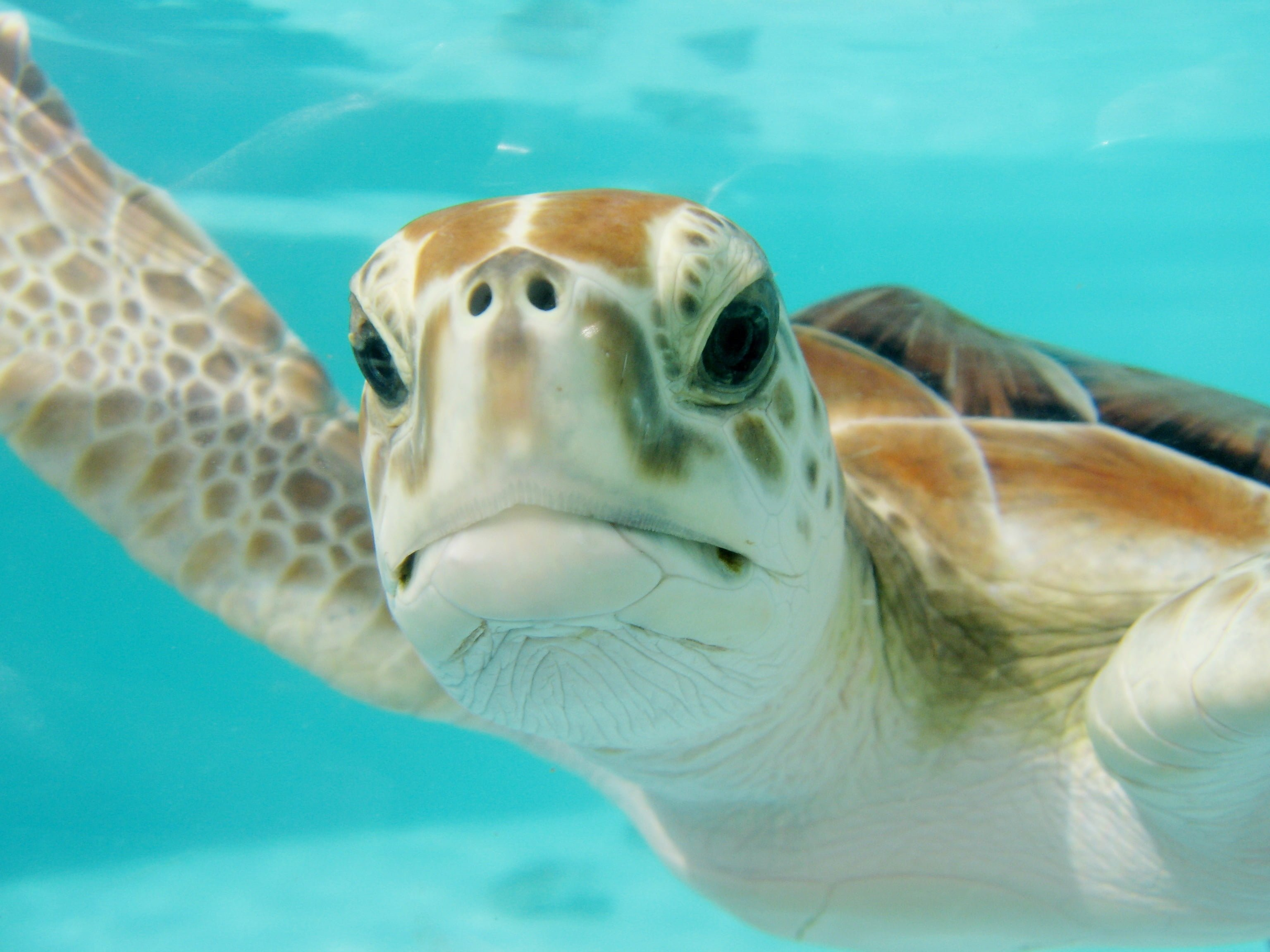 Close up photography of Seaturtle HD wallpaper Wallpaper Flare 3072x2304