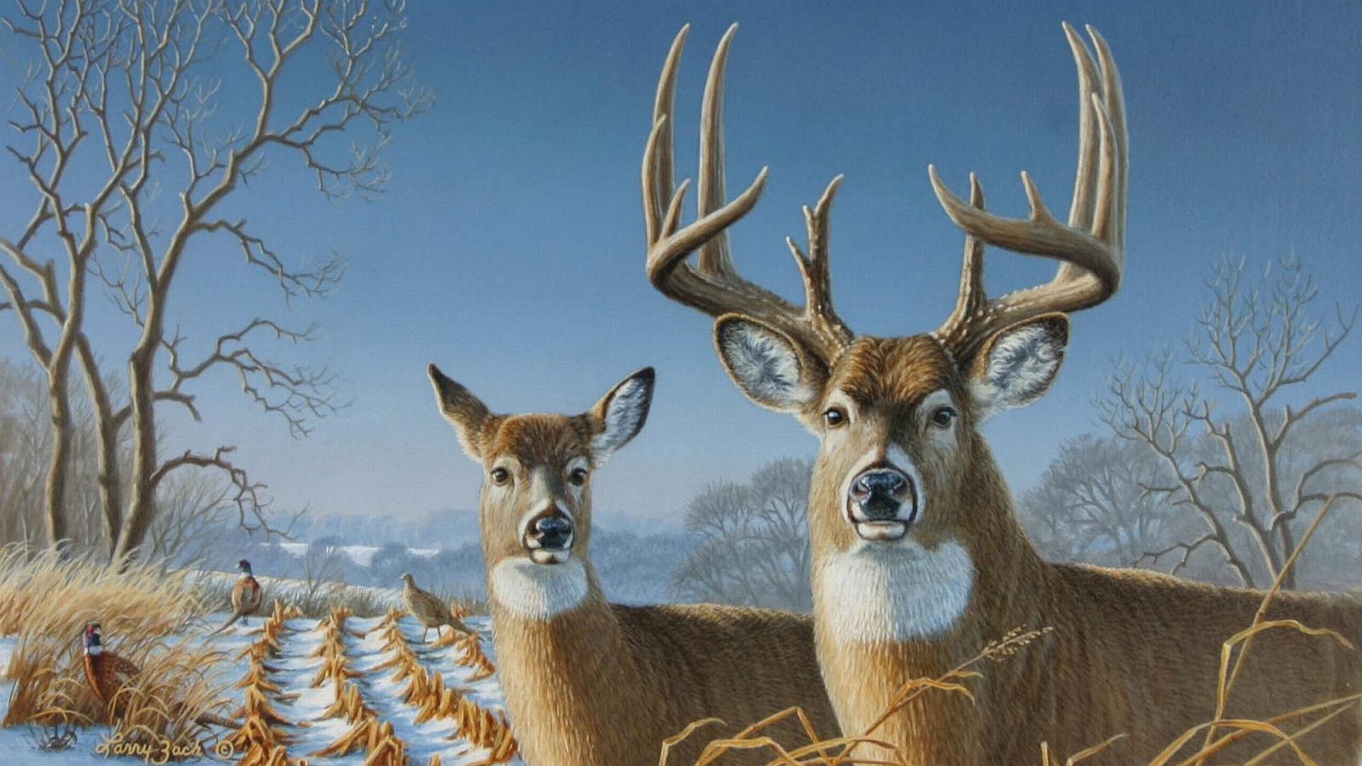 Pics For gt Whitetail Buck Snow Wallpaper 1920x1080