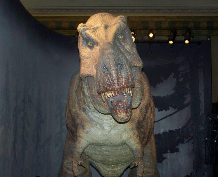 1023032  t rex pjpg 746x606
