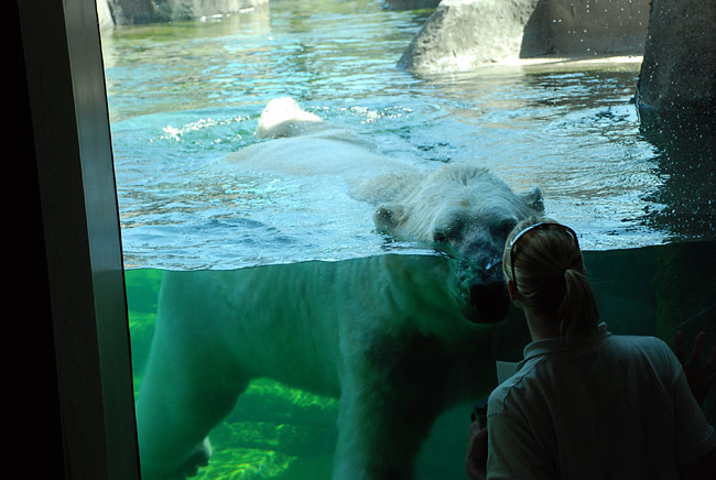 Como Zoo Mn St Paul 650x436