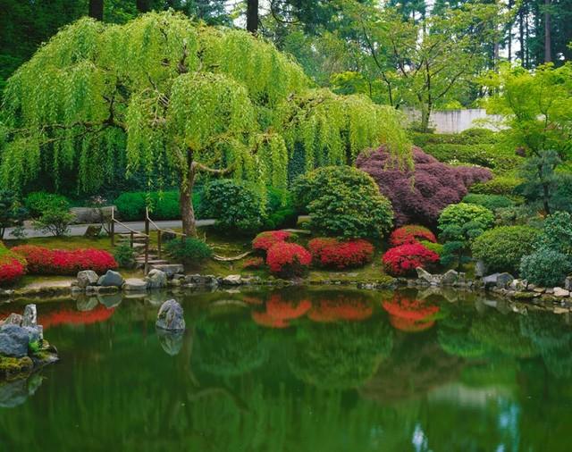 Pond Japanese Garden Wall Art   Asian   Wallpaper   by Murals Your Way 640x506