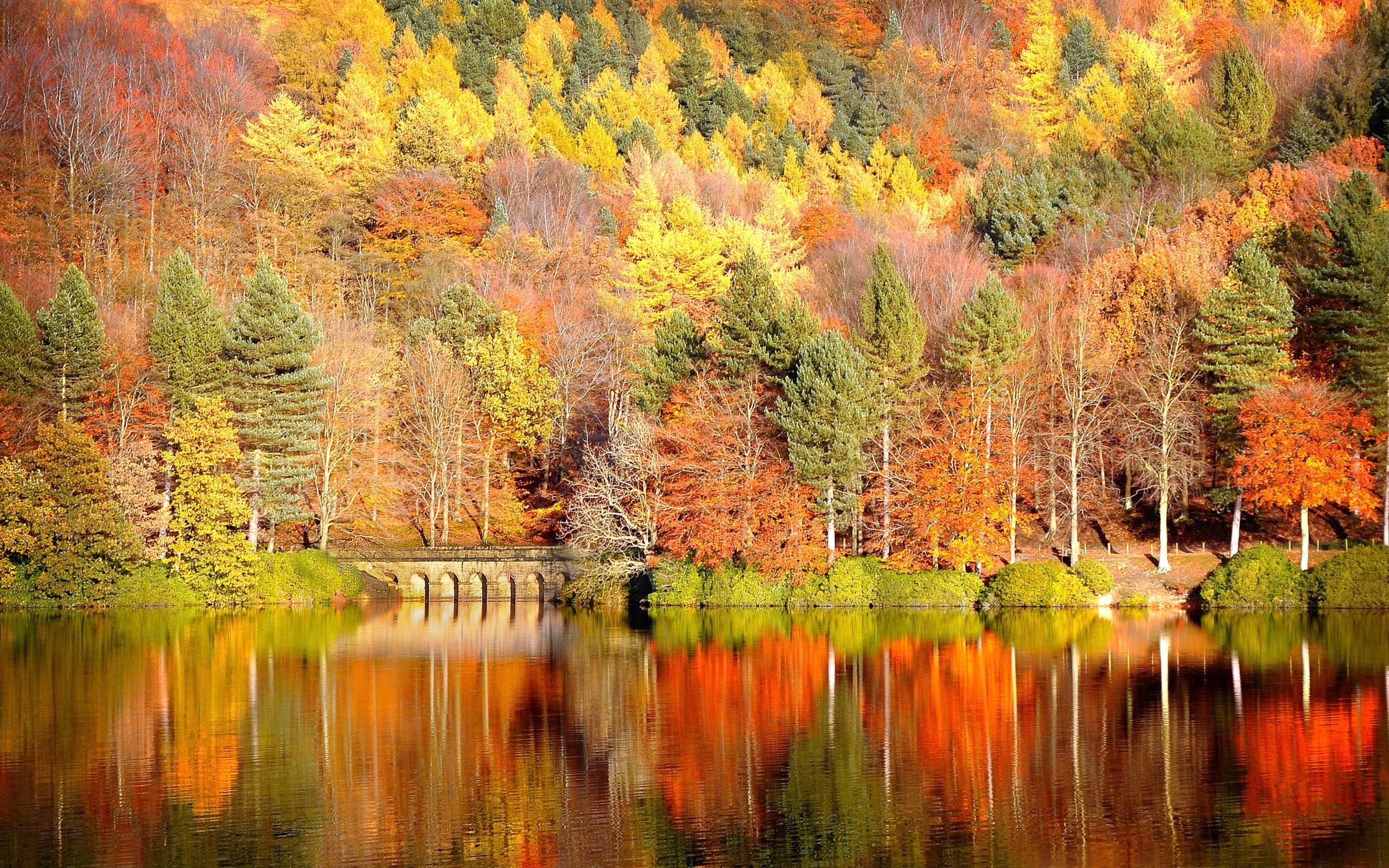 Fall In Colors wallpaper