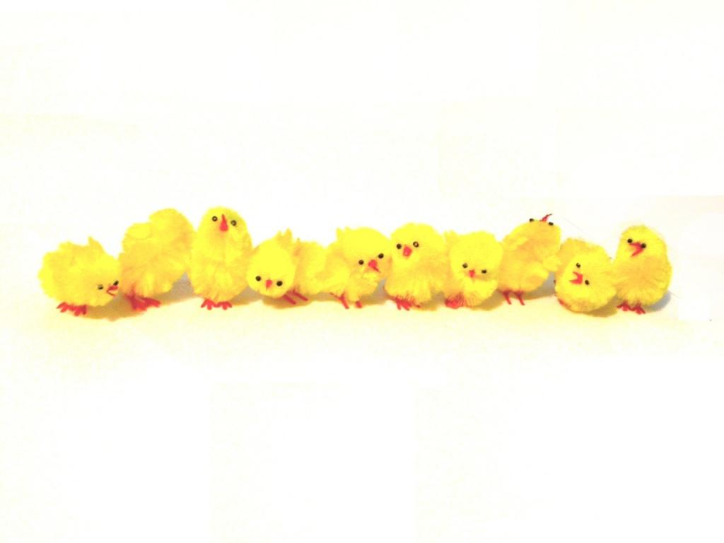 1024x768 Easter chicks desktop PC and Mac wallpaper 1024x768