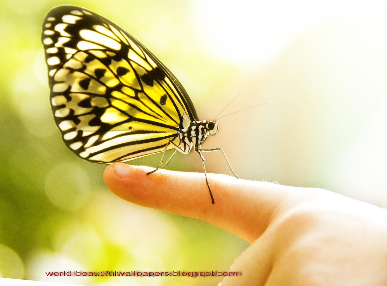 Beautiful Wallpapers Beautiful Butterflies Wallpaper 1600x1185