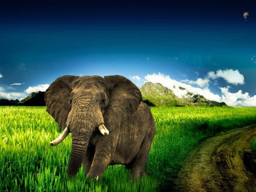 Collection of Elephant Wallpapers 500x375