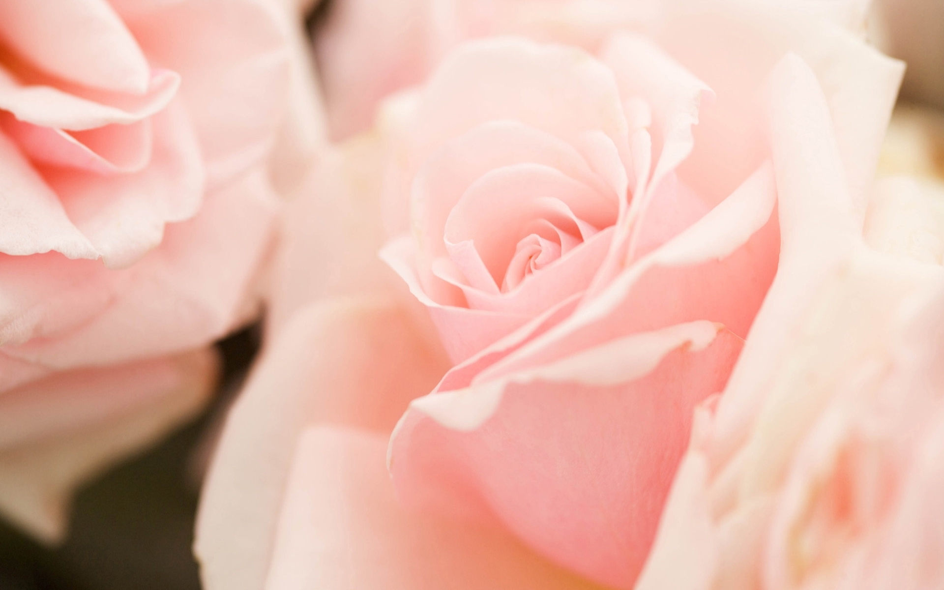 File Name Light Pink Flowers 1920x1200
