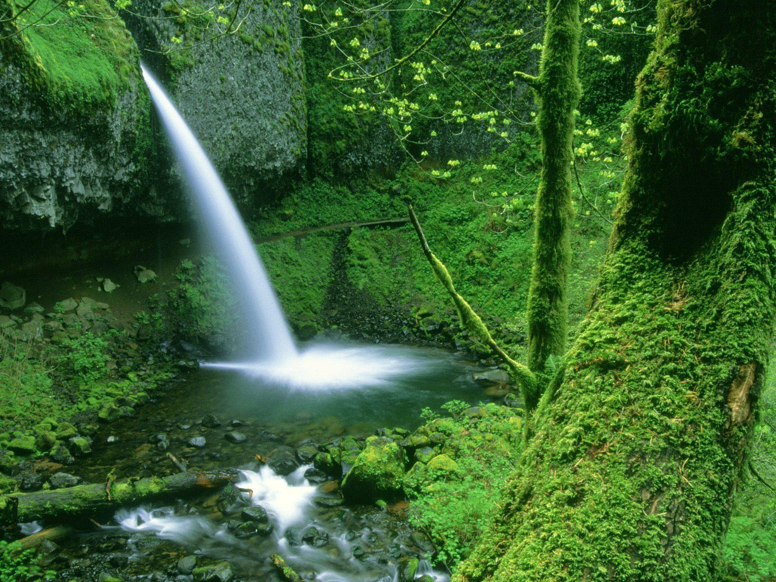 Animals blogs Waterfalls Wallpapers Waterfall Wallpaper Desktop 1600x1200