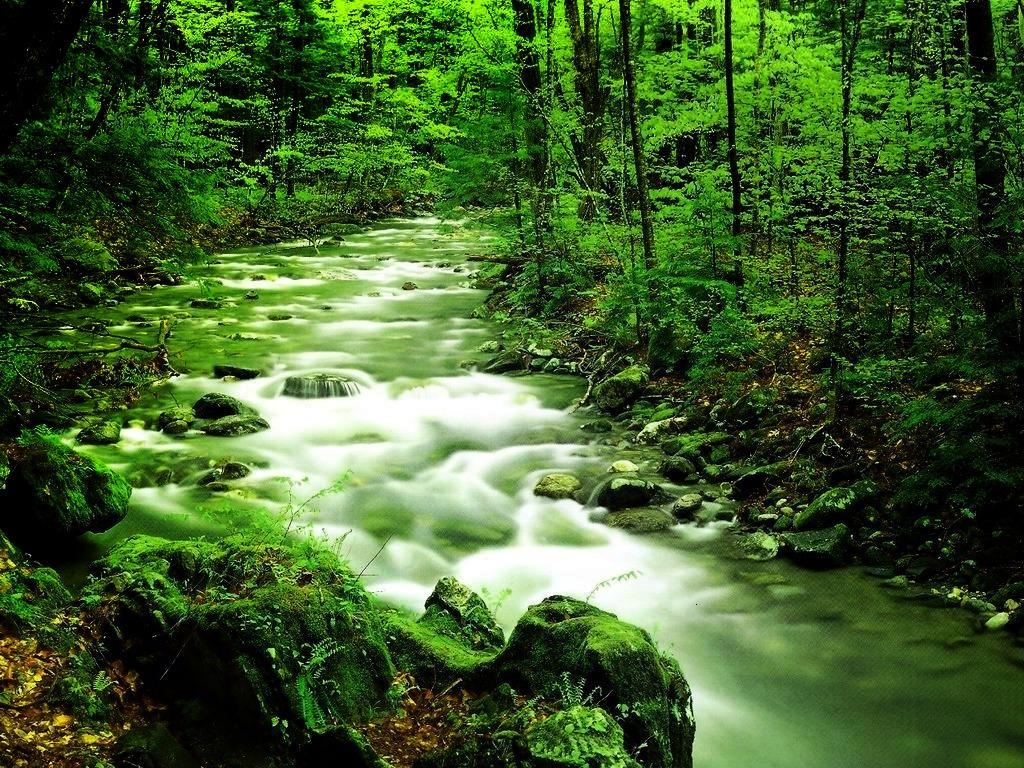 Green Nature Desktop Wallpaper   HD Wallpapers Backgrounds of Your 1024x768