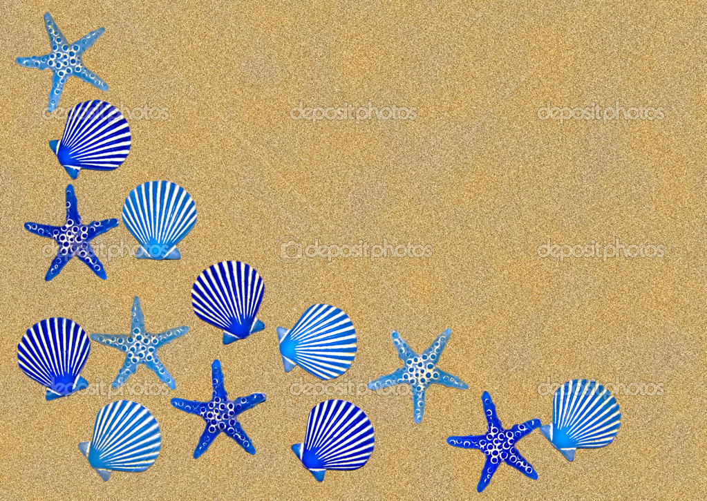 sea shells borders sea shells sea shells the sea shell as a background 1023x725