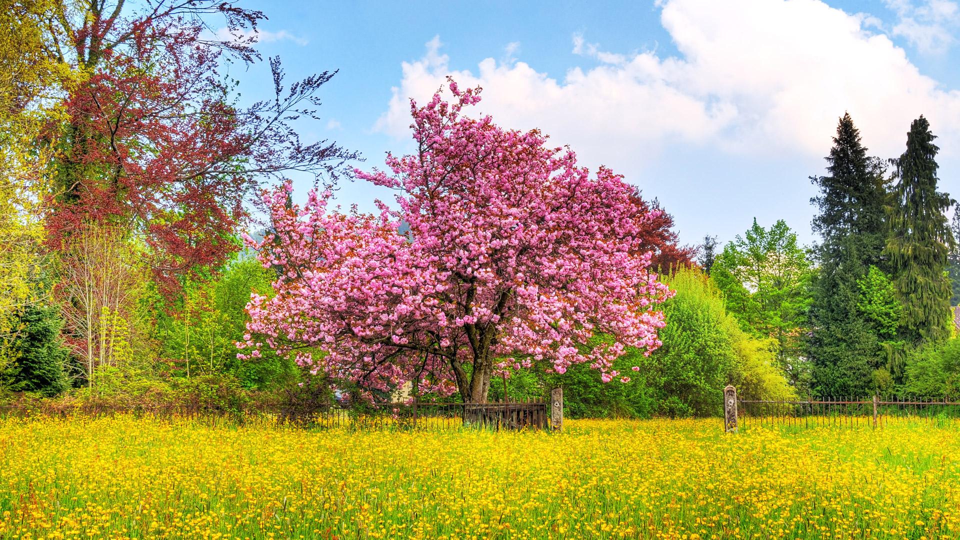 Spring HD Wallpapers 1080p Wide Screen Wallpaper 1080p2K4K 1920x1080