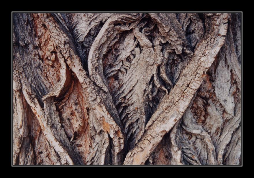 Tree bark Fish Creek by godofodd 880x617