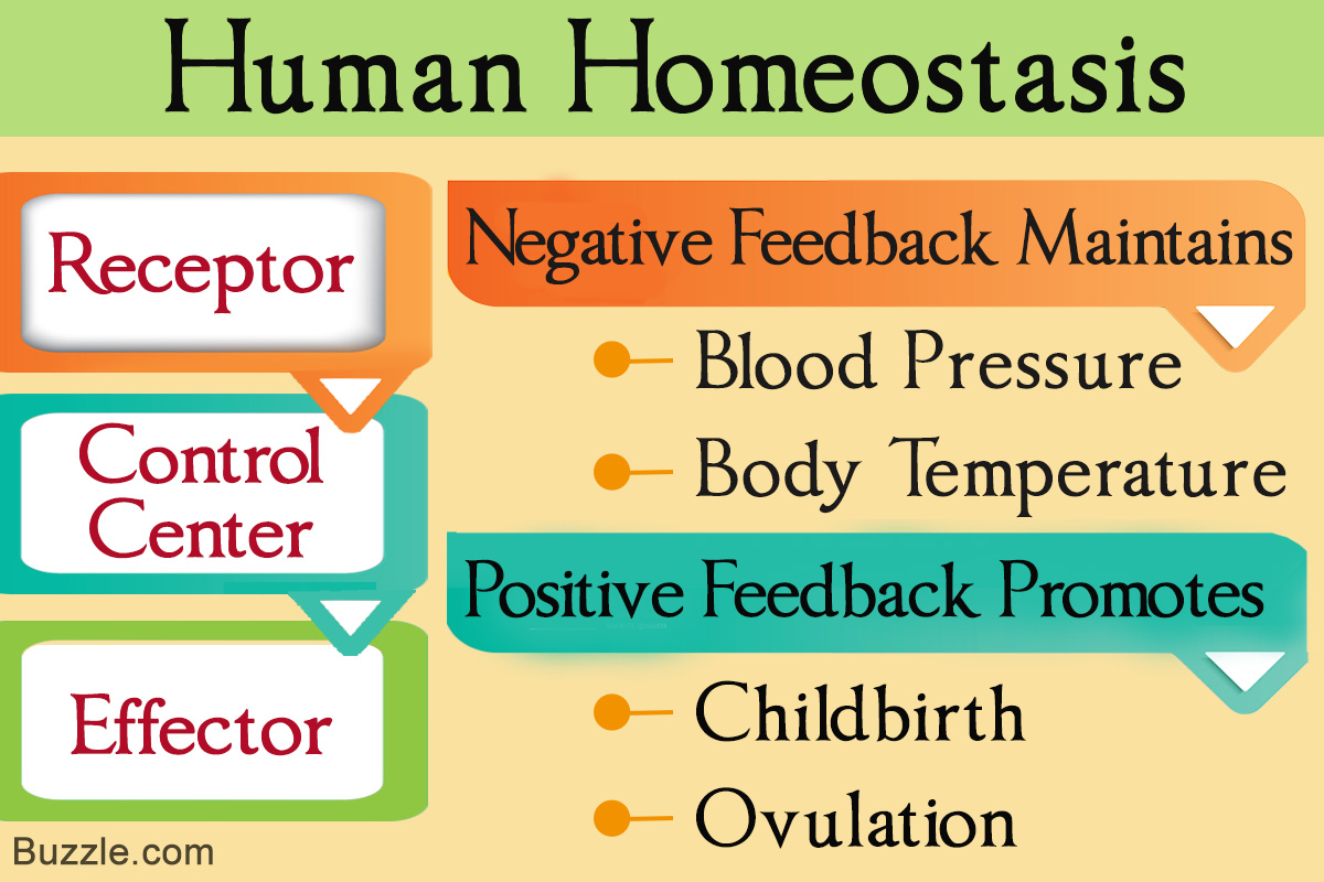 Homeostasis 106 images in Collection Page 3 1200x800