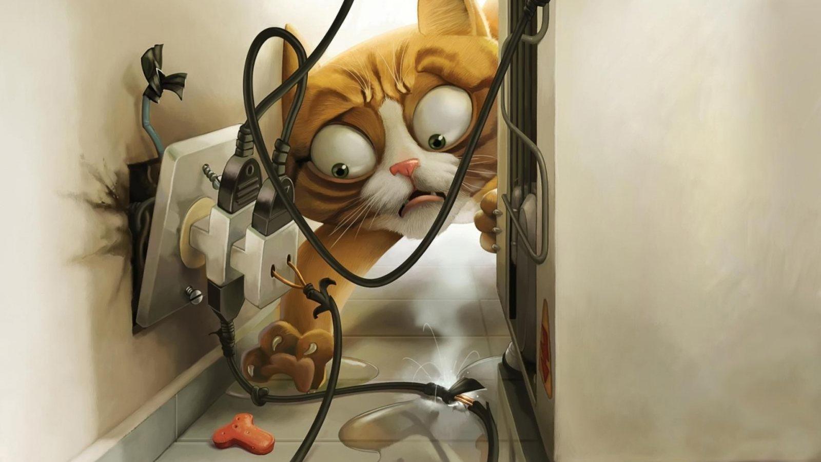 Crazy Cat HD Cool Wallpapers   HD Wallpaper 1600x900