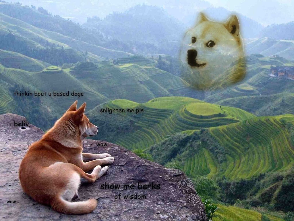 doge shibe wallpaper - photo #4