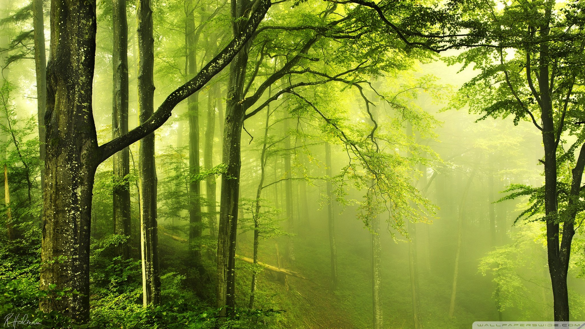 25 Hd Green Forest Wallpapers On Wallpapersafari