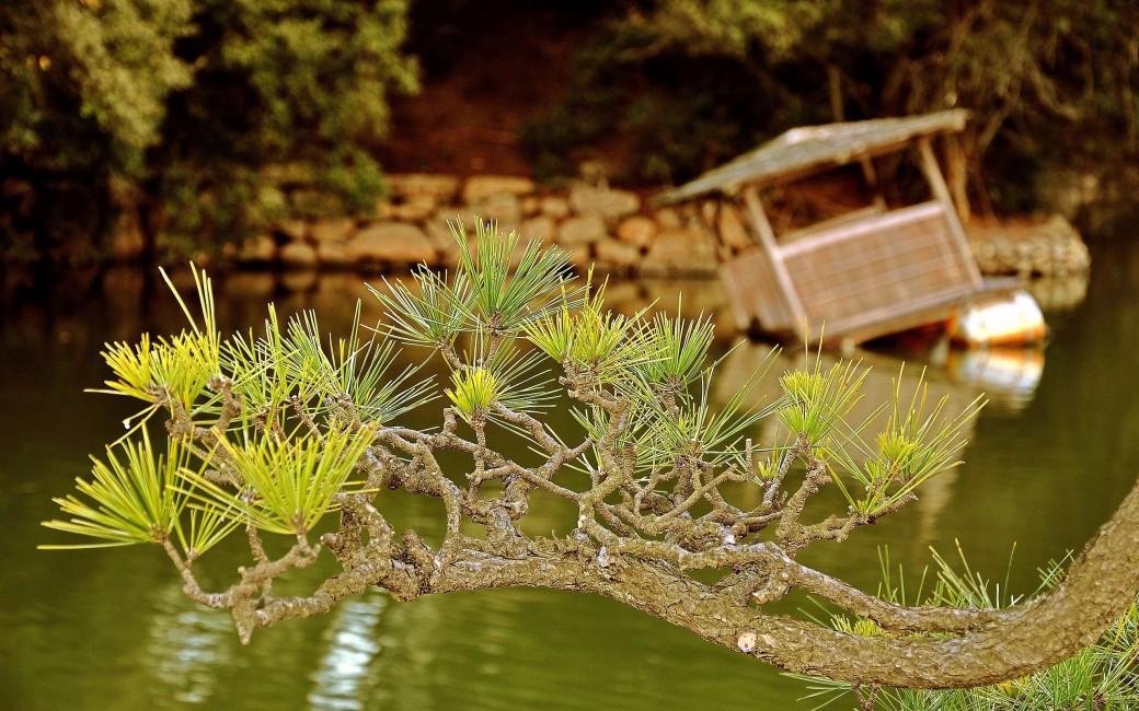 Branch Needles Coniferous Raft Lake   Stock Photos Images 1040x650