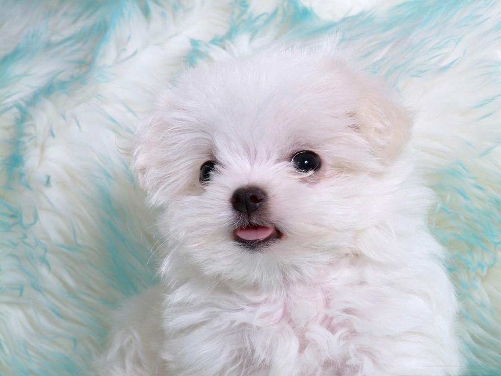 Cute Animal Wallpapers Top HD Wallpapers 1024x768