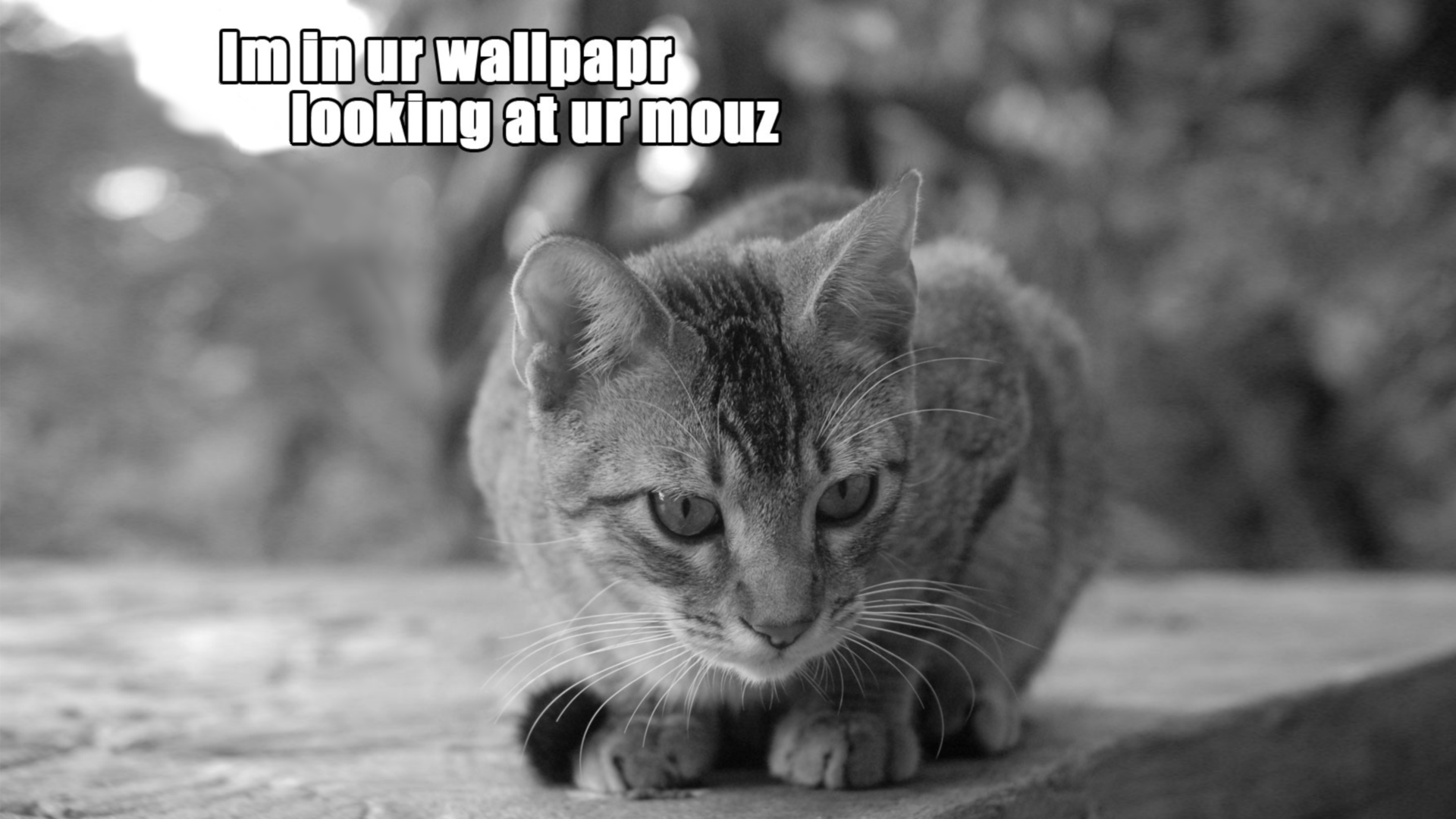 Cats Humor Wallpaper 1920x1080 Cats Humor Mouse Staring Monochrome 1920x1080