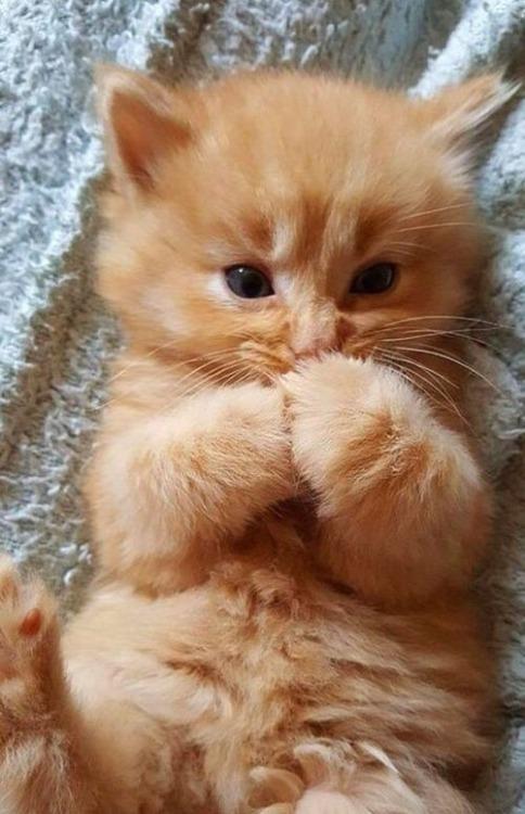 cute animal Tumblr 484x750