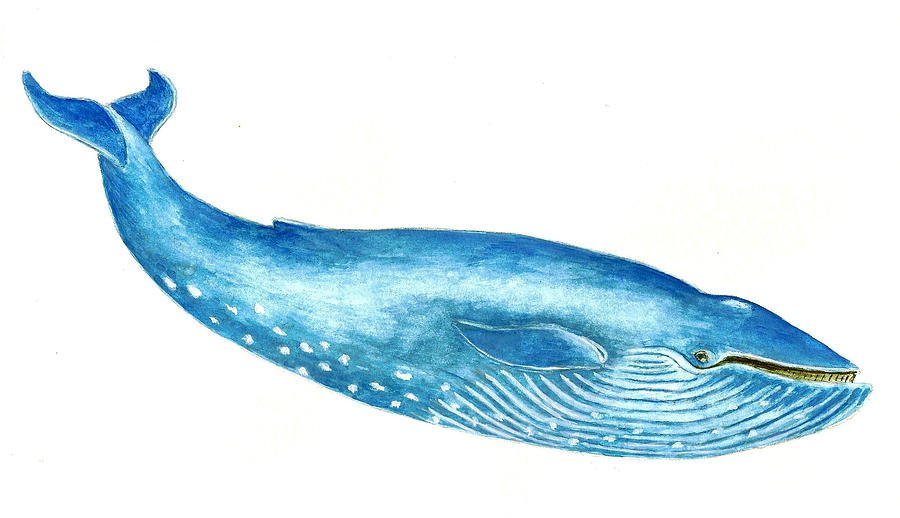 BLUE WHALES ARE GIANTS 900x518
